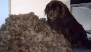 Hond Ontwollen
