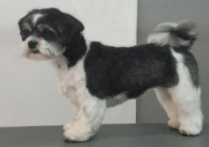 Hond Scheren