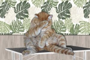 Katten Trimmen zonder narcose